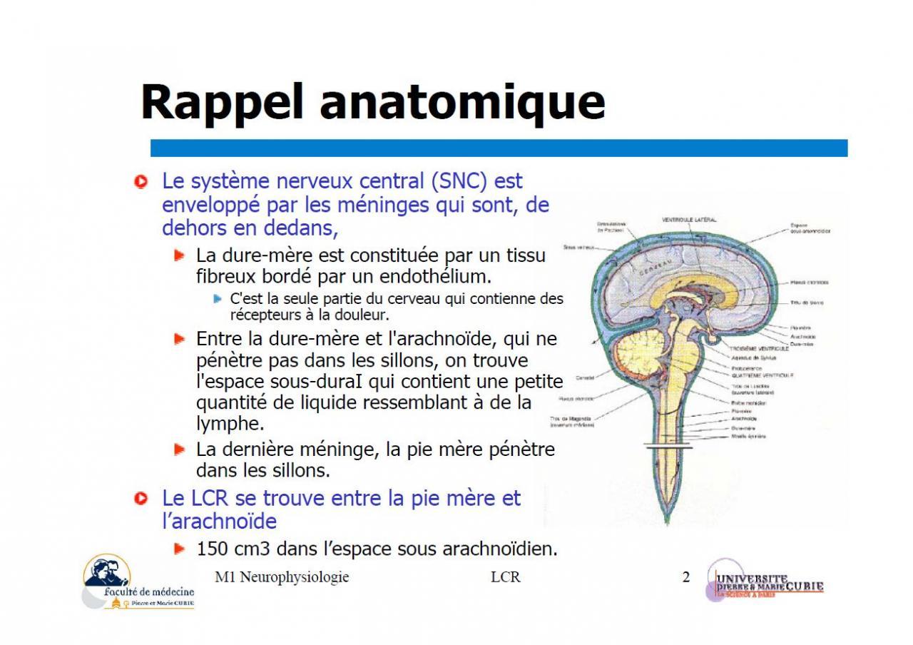 Liquide céphalo-rachidien (rappel anatomique)1