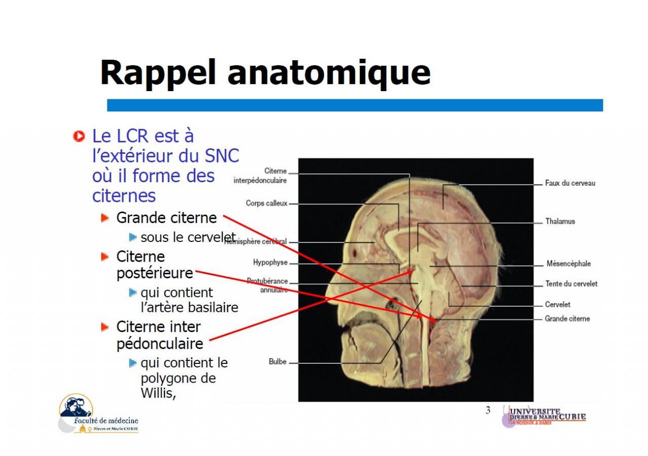 Liquide céphalo-rachidien (rappel anatomique)2