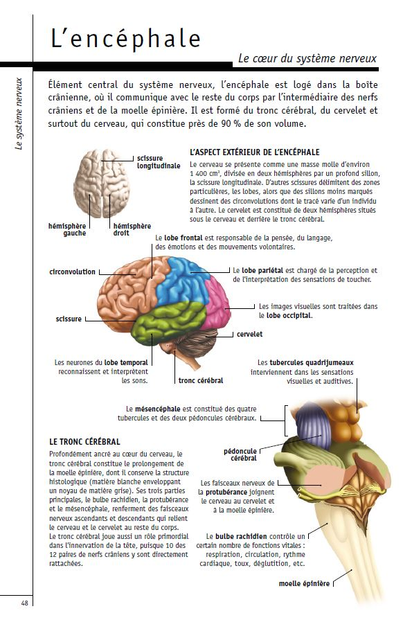 L encephale