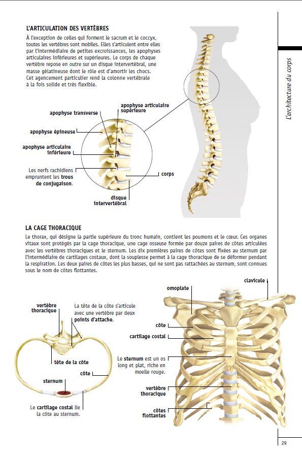 La colonne vertebrale a