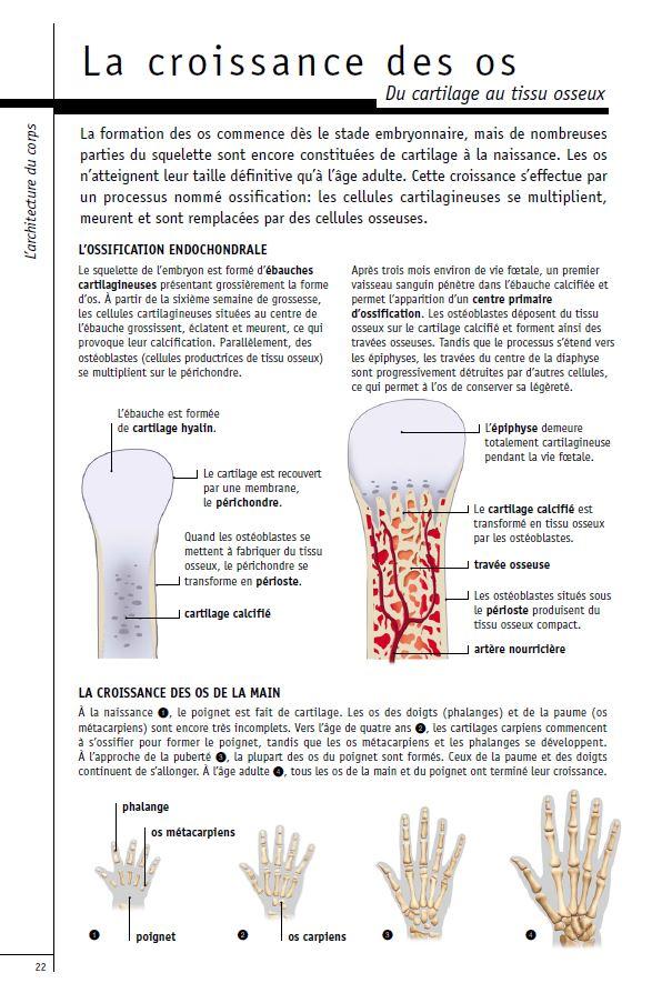 La croissance des os