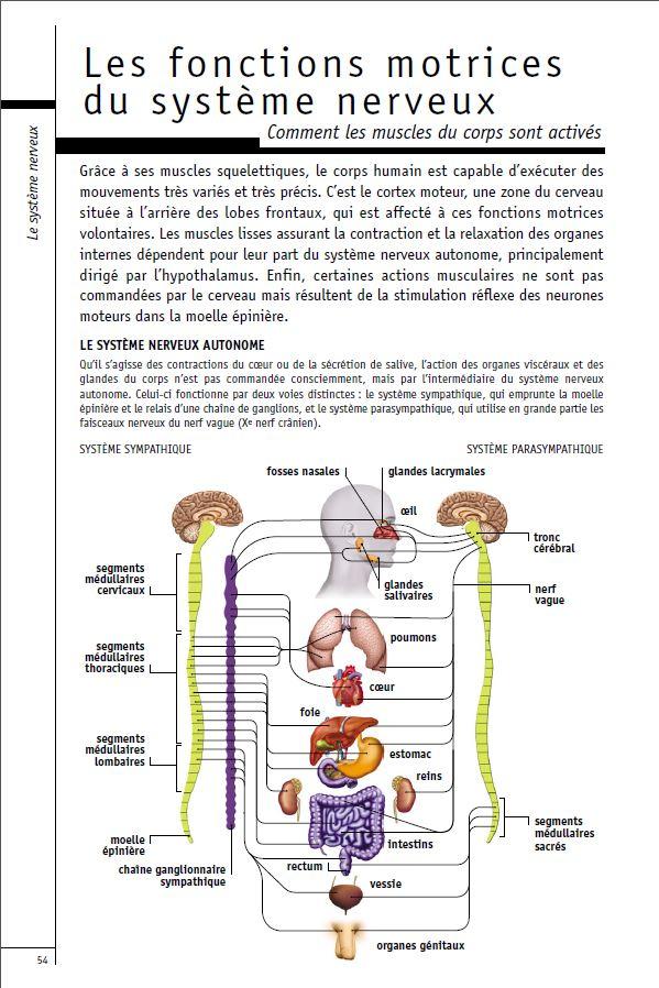Les fonctions motrices du systeme nerveux