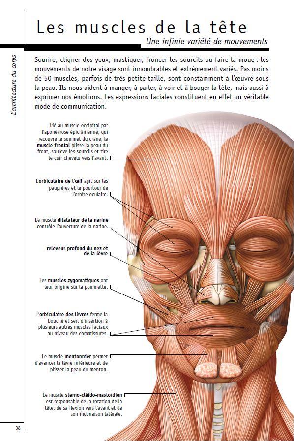 Les muscles de la tete