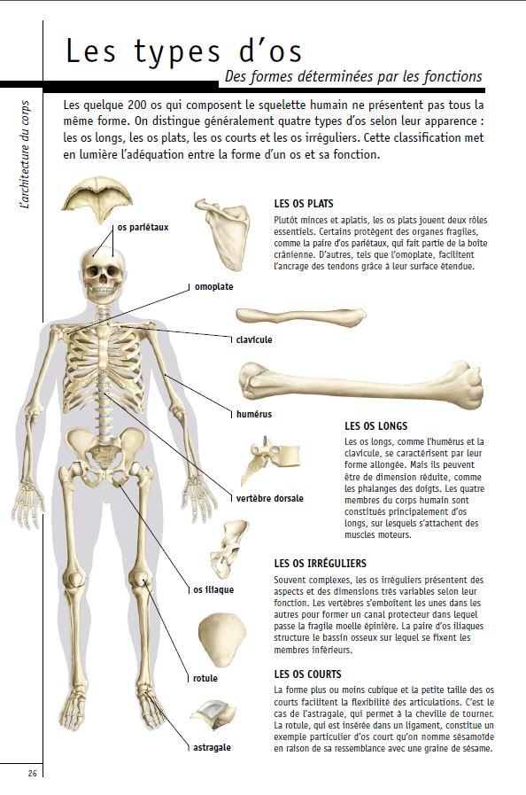 Les types d os
